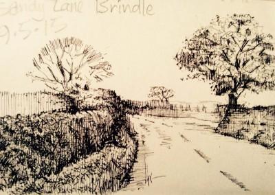 SandyLane_Brindle_01